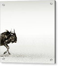 Blue Wildebeest In Desert Acrylic Print by Johan Swanepoel