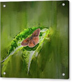 Brown Butterfly #h6 Acrylic Print by Leif Sohlman