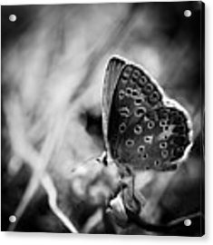 Butterfly In Black And White Acrylic Print by Mirko Chessari