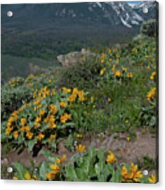 Colorado Spring Wildflower And Mountain Portrait Acrylic Print by Cascade Colors