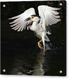 Dance On Water. Acrylic Print by Evelyn Garcia