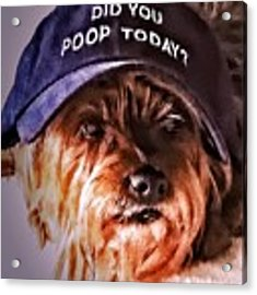 Did You Poop Today Acrylic Print by Kathy Tarochione
