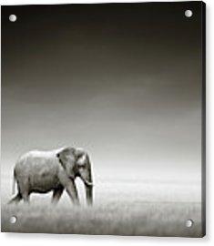Elephant With Zebra Acrylic Print