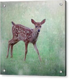 Emerald Morning Acrylic Print by Sally Banfill