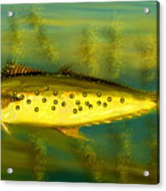Fanciful Golden Mackerel Acrylic Print by Shelli Fitzpatrick