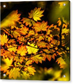 Floating Leaves Acrylic Print by Claudia Abbott