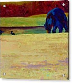 Foraging At Neets Bay - Black Bear Acrylic Print