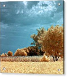Golden Summerscape Acrylic Print by Helga Novelli