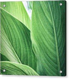 Green Leaves No. 2 Acrylic Print by Todd Blanchard