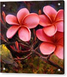 Hawaiian Pink Plumeria And Amakihi Bird Acrylic Print by Karen Whitworth