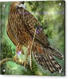 Hawk In The Evergreens Acrylic Print by Darren Cannell