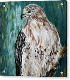 Hawk Acrylic Print by Maria Langgle