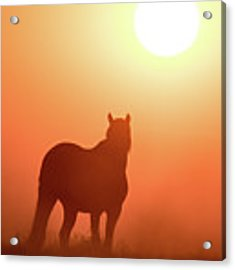 Horse Silhouette Acrylic Print by Wesley Aston