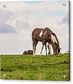 Horses And Clouds Acrylic Print by D K Wall