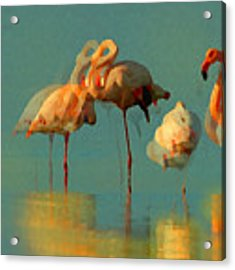 Impressionist Flamingo Abstract Acrylic Print by Shelli Fitzpatrick