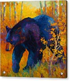 In To Spring - Black Bear Acrylic Print