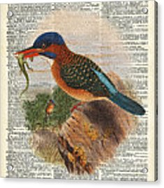 Kingfisher Bird With A Lizard Illustration Over A Old Dictionary Acrylic Print by Anna W
