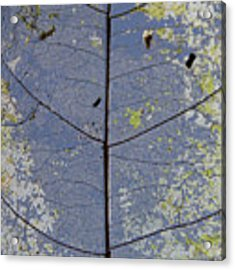 Leaf Structure Acrylic Print by Debbie Cundy