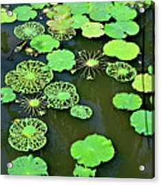 Leaves Imagery Acrylic Print by Yen