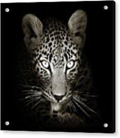 Leopard Portrait In The Dark Acrylic Print by Johan Swanepoel