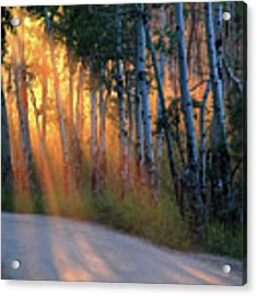 Lighting The Way Acrylic Print by Shane Bechler