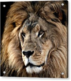 Lion King Of The Jungle 2 Acrylic Print by James Sage