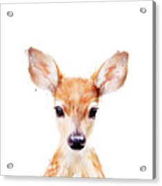 Little Deer Acrylic Print by Amy Hamilton