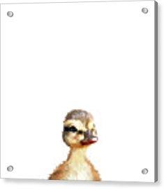 Little Duck Acrylic Print by Amy Hamilton