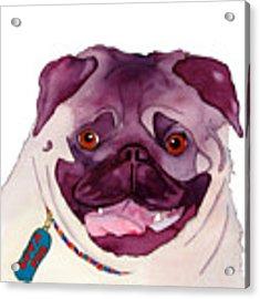 Love A Pug Acrylic Print by Jo Lynch