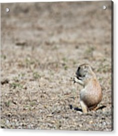 Lunch Time Acrylic Print by David Buhler