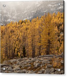Magnificent Fall Acrylic Print by Emily Dickey