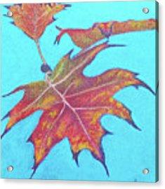 Drifting Into Fall Acrylic Print by Phyllis Howard