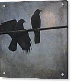 Night Watch  Acrylic Print by Sally Banfill