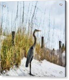 Norriego Point Heron Acrylic Print by Mel Steinhauer