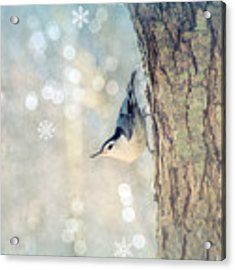 Nuthatch Season's Greetings Acrylic Print by Rima Biswas