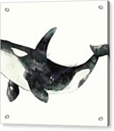 Orca From Arctic And Antarctic Chart Acrylic Print by Amy Hamilton