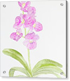 Orchid Gift Acrylic Print by Laurel Best