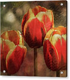 Painted Tulips Acrylic Print by Richard Ricci