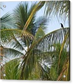 Palm Collection - Chilling Acrylic Print by Victor K