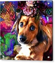 Party Animal Acrylic Print by Delight Worthyn