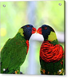 Rainbow Birds Acrylic Print by Cynthia Guinn