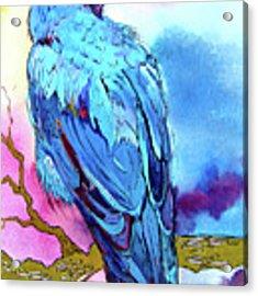 Raven's Sight Acrylic Print by Jo Lynch