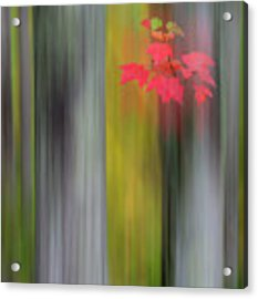 Red Leaves - Abstract Acrylic Print by Gary Lengyel