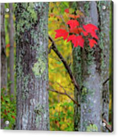 Red Leaves Acrylic Print by Gary Lengyel
