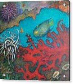 Red Reef Acrylic Print by Lynn Buettner