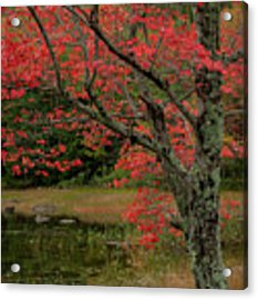 Red Tree II Acrylic Print by Gary Lengyel