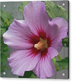 Rose Of Sharon Acrylic Print by John Dyess