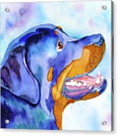Rotty Rottweiler Blues Acrylic Print by Jo Lynch