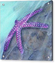Sea Star Rays Acrylic Print by Betsy Hackett