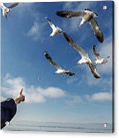 Seagull Flying Acrylic Print by Pradeep Raja PRINTS